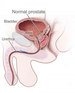 prostate normal men's health